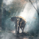 ミステリアスな雰囲気を演出できる 霧や煙が立ち込めるようなテクスチャー素材「20 Mysterious Fog Overlays」