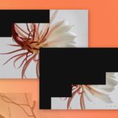 画像をスライスして徐々に画面を切り替える「Slice Revealer」