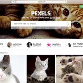 ネコ好きにはたまらない!商用利用無料のネコの写真素材がいっぱいある! -Pexels Cats