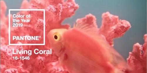 2019年の流行色・トレンドカラーは、かわいい珊瑚色の「Living Coral」HTMLのコードは「#FF6F61」
